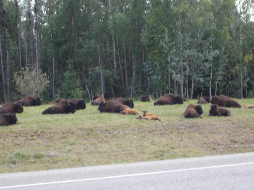 Alaska 2019 032